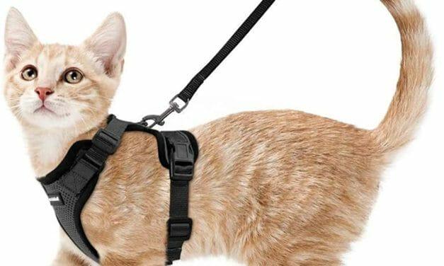 Arnés para Gatos