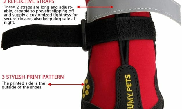 Botas Resistente al Agua para Perros